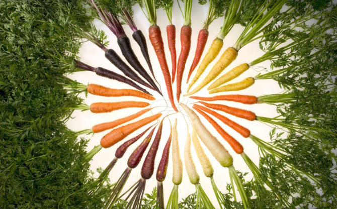 carrots_variety_vegetables